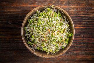 Nasiona na kiełki - Kiełki z dużą ilością witaminy B - Zestaw 9 szt. + Kiełkownica z 3 szalkami