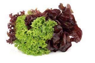 Sałata liściowa - Lollo rossa - 950 nasion