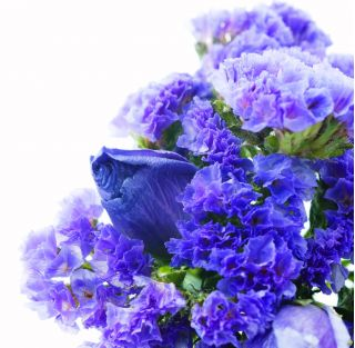 Zatrwian wrębny - niebieski - 105 nasion