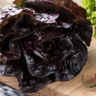 Sałata masłowa czerwono-zielona Quattro stagioni - 900 nasion