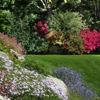 Mieszanka roślin jednorocznych do ogrodów skalnych - 25 nasion