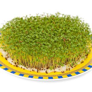 Nasiona na kiełki - Zestaw XXL - 18 szt. + Kiełkownica z 3 szalkami