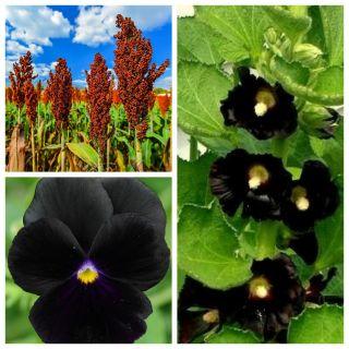 Czarna Mamba - zestaw 3 odmian nasion kwiatów