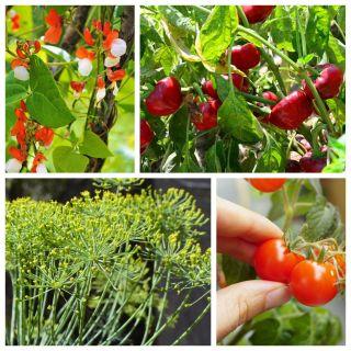 Warzywa do uprawy w donicach - 4 gatunki nasion