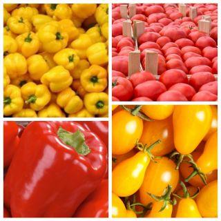 Papryka + pomidor - zestaw 4 odmian nasion warzyw