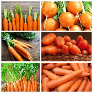 Marchew wczesna - zestaw 6 odmian nasion warzyw