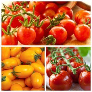 Pomidor czereśniowy - zestaw 3 odmian nasion warzyw