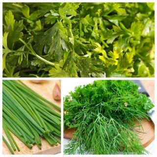 Koper, pietruszka naciowa, szczypiorek - zestaw 3 odmian nasion warzyw