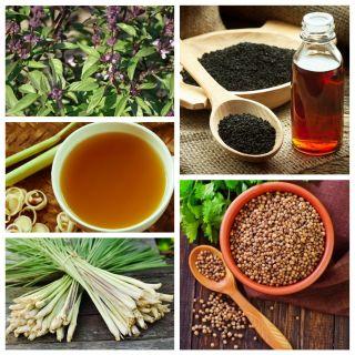 Smaki orientu - zestaw 4 odmian nasion