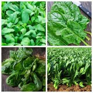 Szpinak - zestaw 4 odmian nasion warzyw
