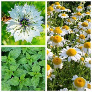 Rośliny wspomagające walkę z  alergią - zestaw 3 odmian nasion