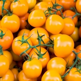 Pomidor Figiel - pomarańczowy