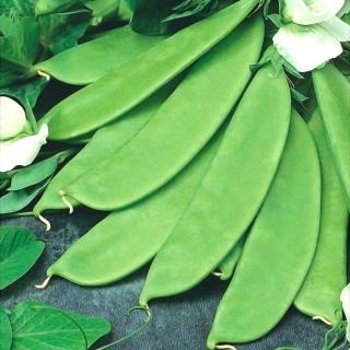 Groch cukrowy BAJKA - 160 nasion