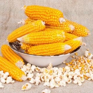 Kukurydza pękająca Dobosz F1 - Popcorn - 70 nasion