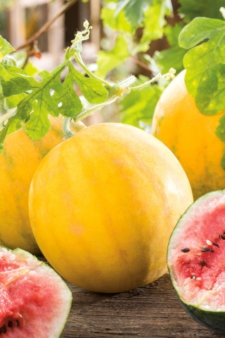 Kawon, arbuz - Złoto Wolicy - 9 nasion