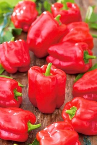 Papryka Ożarowska - czerwona, słodka - 90 nasion