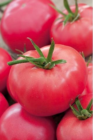 Pomidor Adonis - gruntowy malinowy