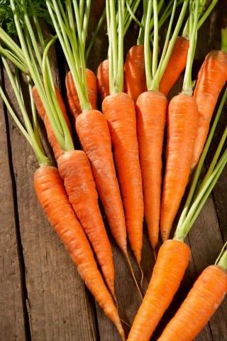 Marchew Rubrovitamina - średniowczesna, typ karotka - szczególnie polecana na soki - 4250 nasion