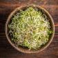 Nasiona na kiełki - Fenkuł