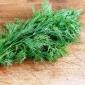 Koper ogrodowy Lukullus - 2800 nasion