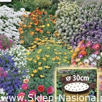 Kwietny Dywan Mieszanka karłowych kwiatów jednorocznych krążek 30 cm