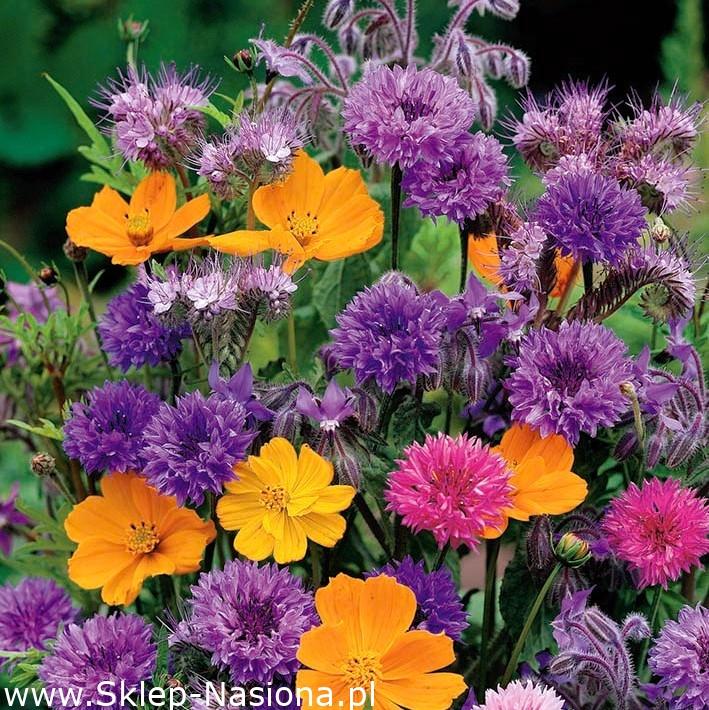 Pachnace Kwiaty Mieszanka Roslin Jednorocznych O Pachnacych Kwiatach 120 Nasion W Sklep Nasiona Sprawdz Darmowa Wysylke